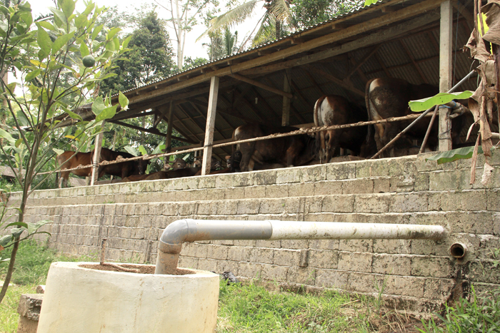 cow shed biogas system